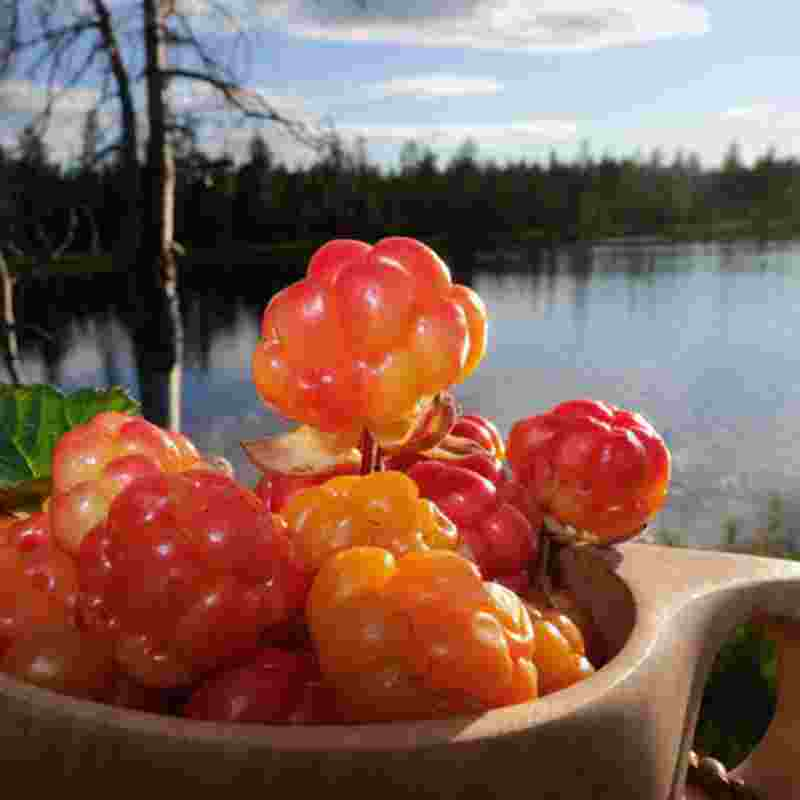 cloudberries-squ.jpg